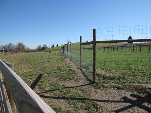 Deer Fences East Hampton Fence Amp Gate
